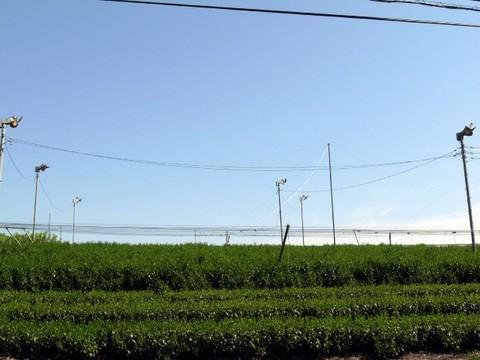 2012050500.JPG