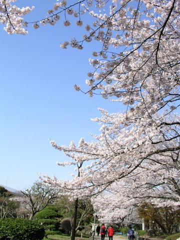 隅田公園 桜.jpg